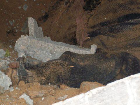 Hand among rubble beneath Samouni house