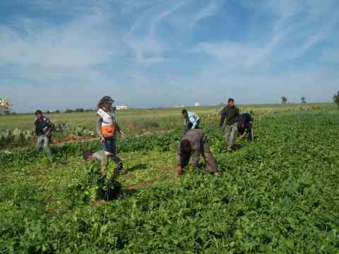 Farmers eye Israeli jeeps, picking spinach in between shots