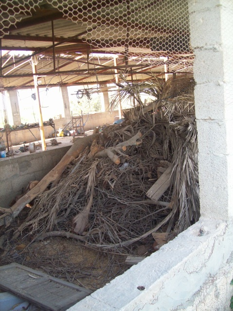 Destroyed olive trees inside destroyed chicken shed (May 08)